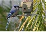 pictures of Bird Feeders Lowes