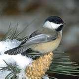 Bird Feeder Naperville pictures