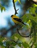 Bird Feeder Naperville photos