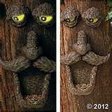 Bird Feeder Tree Face images