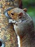 pictures of Bird Feeders Law