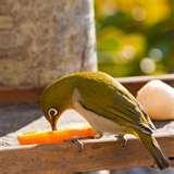 Bird Feeder Mt images