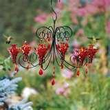 images of Humming Bird Feeders Location