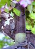photos of Bird Feeders Law
