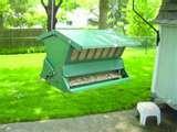 Bird Feeders Law images