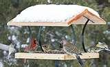 images of Bird Feeders For Doves