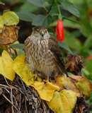 photos of Bird Feeders For Doves