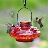 Humming Bird Feeders Accessories images