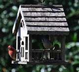 Bird Feeders Law pictures