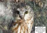 Iowa Hawkeye Bird Feeder photos