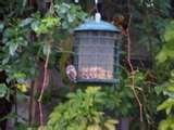 Bird Feeders Rodents pictures