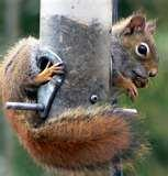 Bird Feeders Rodents photos