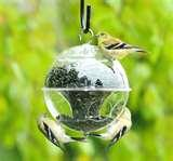 Bird Feeders Live pictures