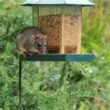 pictures of Bird Feeders Rodents