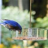 Bird Feeders Ny