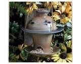 Bird Feeders Office pictures
