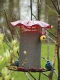 pictures of Bird Feeder Nyjer
