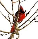 Backyard Bistro Bird Feeder images