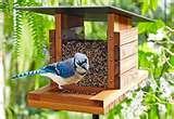 Backyard Bistro Bird Feeder photos