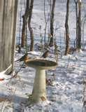 photos of Bird Feeders Out Of Wood