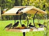 Bird Feeders Out Of Wood