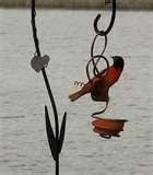 pictures of Bird Feeders Grade 1