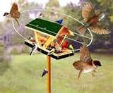 photos of Bird Feeders Paypal