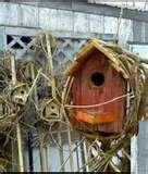 Bird Feeders Paypal photos