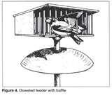 Squirrels Bird Feeders Prevent photos