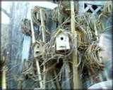images of Bird Feeders Paypal