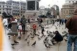 Bird Feeders Fly Through photos