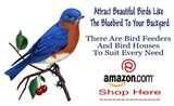 images of Bird Feeders Your Backyard