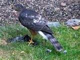Bird Feeder Puyallup images
