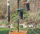 photos of Bird Feeders Your Backyard