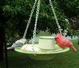 Bird Feeder Glass Plate