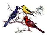 Opus Bird Feeders photos