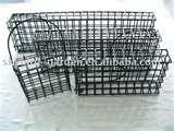 pictures of Bird Cage Feeder