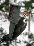 images of Wild Birds Unlimited Bird Feeders