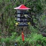 Wild Bird Feeder images