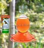 Oriole Bird Feeder pictures