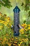 Bird Feeders Canada photos