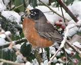 Bird Feeders Canada images