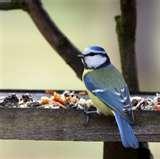 Wild Bird Feeder pictures