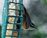 Bird Feeders Canada pictures
