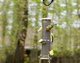 Tube Bird Feeder photos