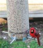 images of Tube Bird Feeder