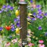photos of Tube Bird Feeders