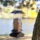 Squirrel Bird Feeder photos