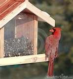 pictures of Cardinal Bird Feeders