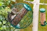 pictures of Squirrel Bird Feeder